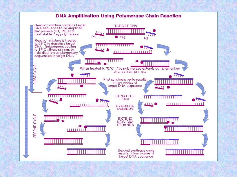 Cockerill FR III. Arch Pathol Lab Med. 2003;127:1112
