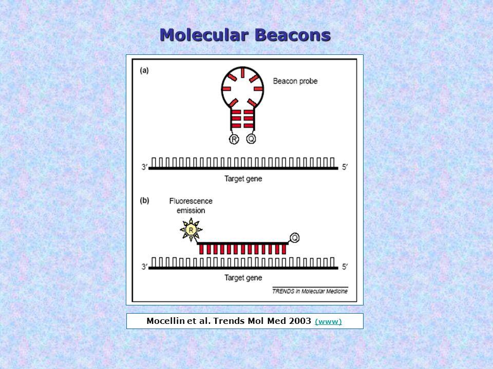 Mocellin et al. Trends Mol Med 2003 (www) (www) Molecular Beacons