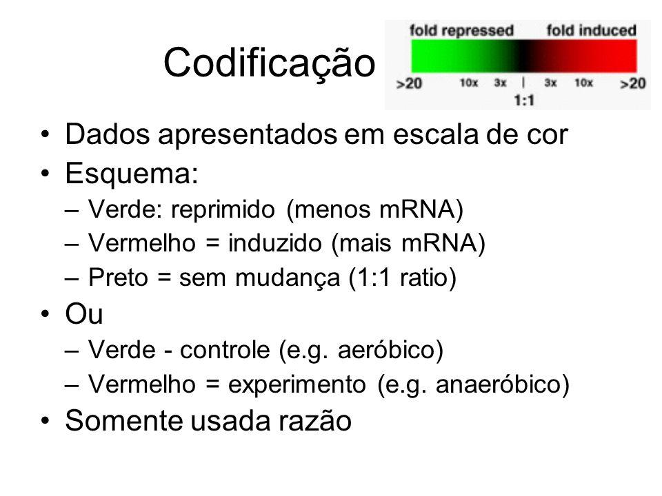 Codificação de cor Dados apresentados em escala de cor Esquema: –Verde: reprimido (menos mRNA) –Vermelho = induzido (mais mRNA) –Preto = sem mudança (