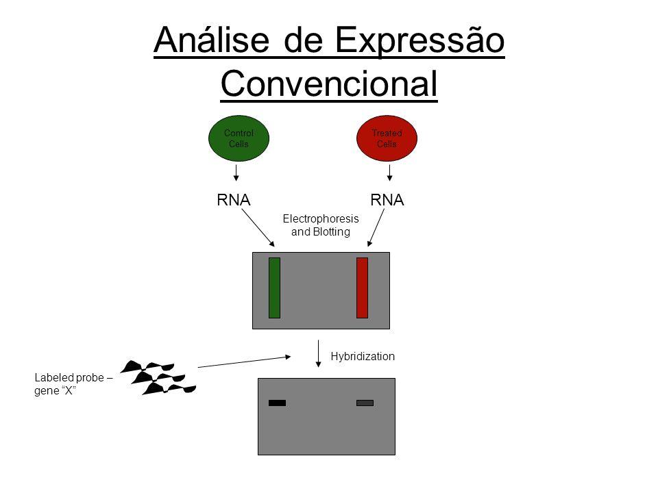 Análise de Expressão Convencional Electrophoresis and Blotting Labeled probe – gene X RNA Control Cells Treated Cells RNA Hybridization