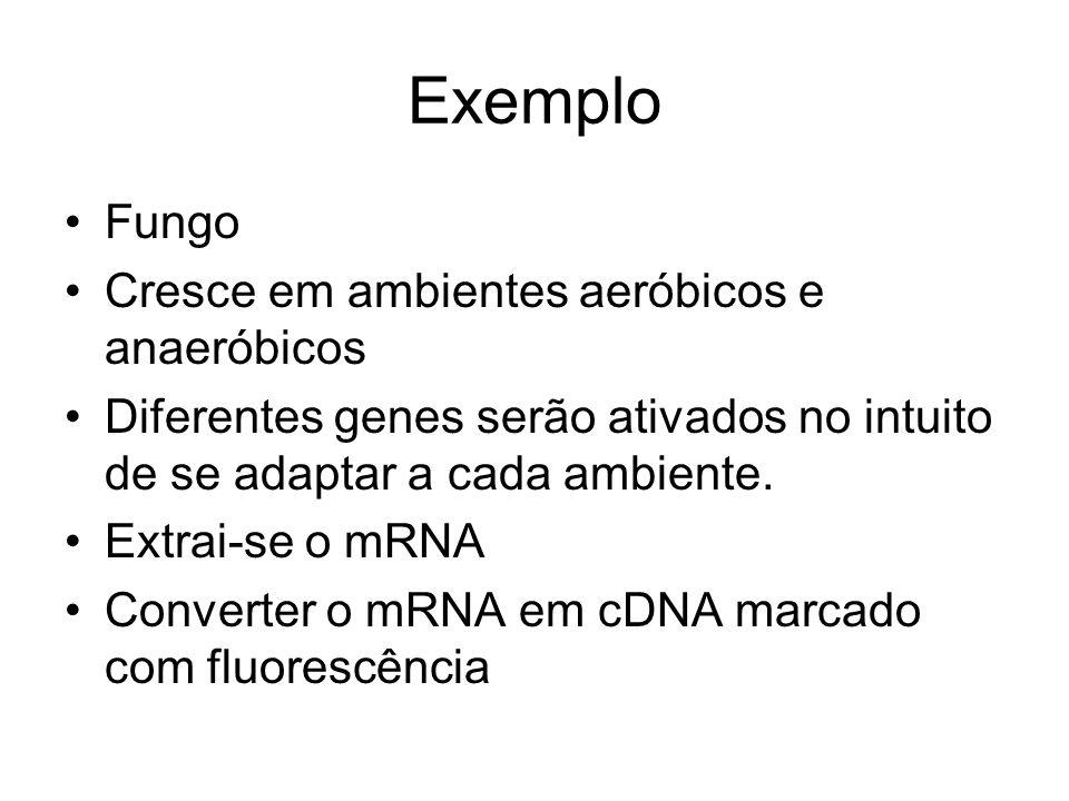 Exemplo Fungo Cresce em ambientes aeróbicos e anaeróbicos Diferentes genes serão ativados no intuito de se adaptar a cada ambiente. Extrai-se o mRNA C