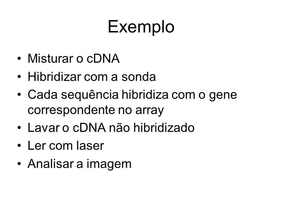 Exemplo Misturar o cDNA Hibridizar com a sonda Cada sequência hibridiza com o gene correspondente no array Lavar o cDNA não hibridizado Ler com laser