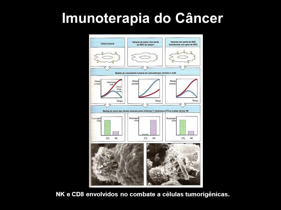 Imunoterapia do Câncer NK e CD8 envolvidos no combate a células tumorigênicas.