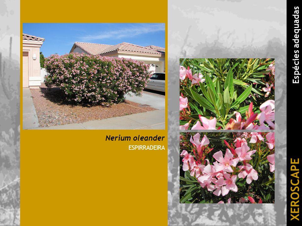 Nerium oleander ESPIRRADEIRA XEROSCAPE Espécies adequadas