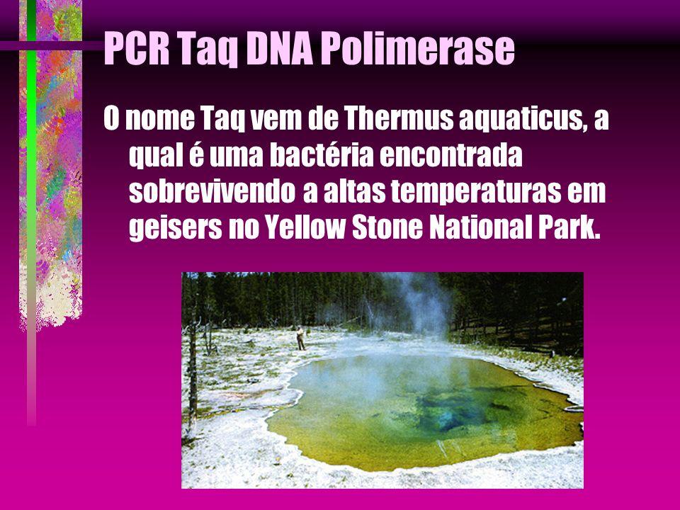 PCR Taq DNA Polimerase O nome Taq vem de Thermus aquaticus, a qual é uma bactéria encontrada sobrevivendo a altas temperaturas em geisers no Yellow St