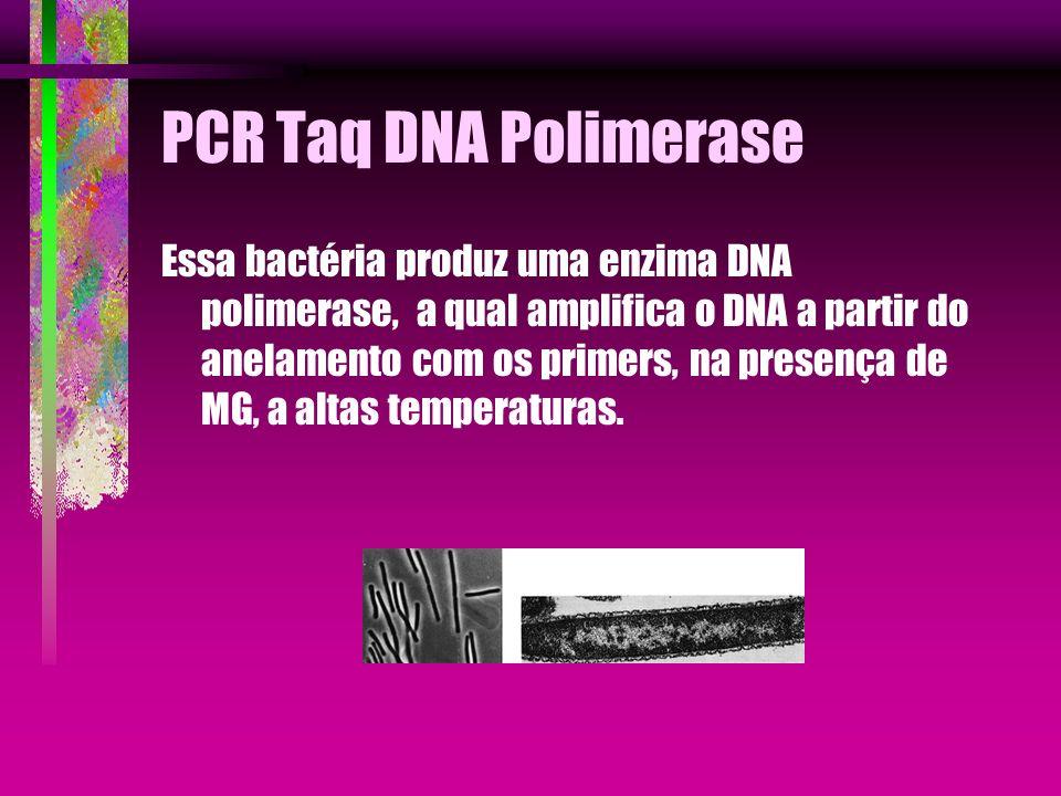 PCR Taq DNA Polimerase Essa bactéria produz uma enzima DNA polimerase, a qual amplifica o DNA a partir do anelamento com os primers, na presença de MG
