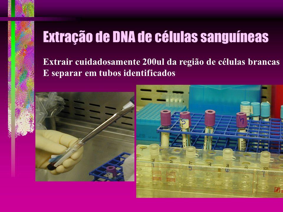Extração de DNA de células sanguíneas Extrair cuidadosamente 200ul da região de células brancas E separar em tubos identificados