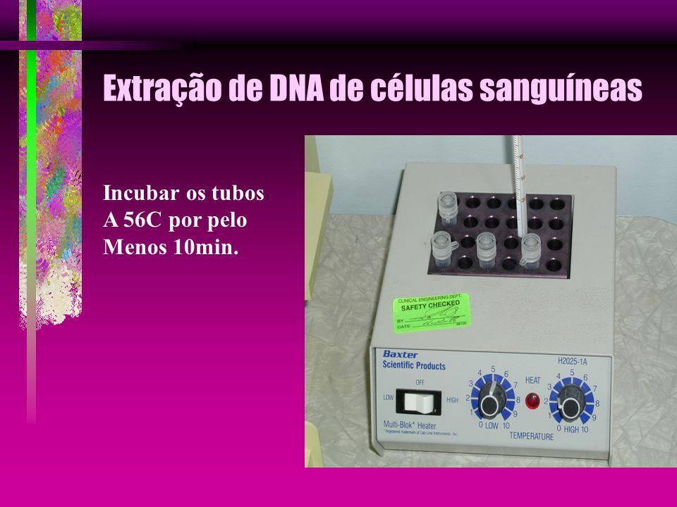 Extração de DNA de células sanguíneas Incubar os tubos A 56C por pelo Menos 10min.