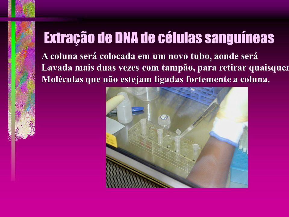 Extração de DNA de células sanguíneas A coluna será colocada em um novo tubo, aonde será Lavada mais duas vezes com tampão, para retirar quaisquer Mol