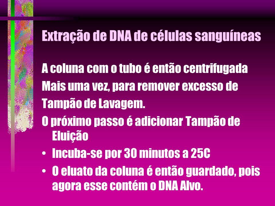 Extração de DNA de células sanguíneas A coluna com o tubo é então centrifugada Mais uma vez, para remover excesso de Tampão de Lavagem. O próximo pass