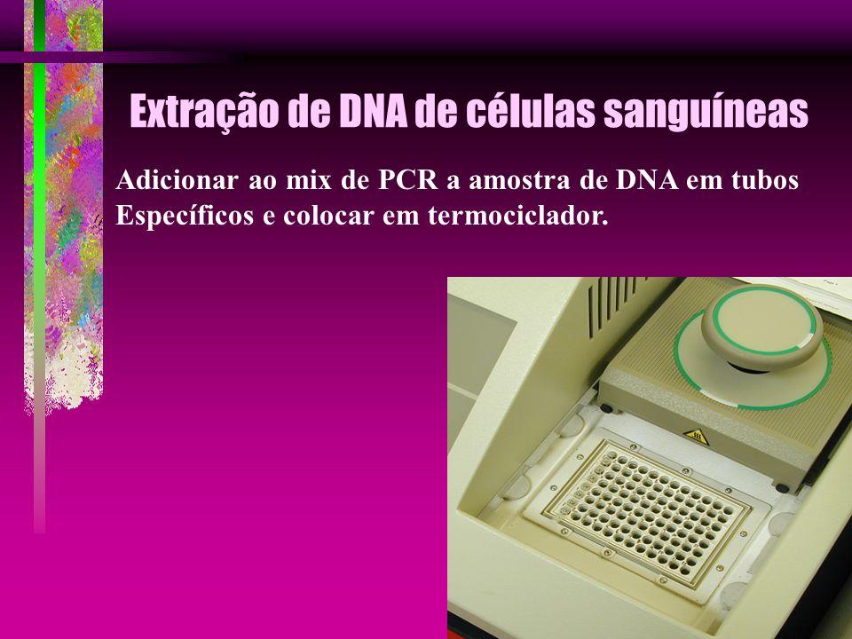 Extração de DNA de células sanguíneas Adicionar ao mix de PCR a amostra de DNA em tubos Específicos e colocar em termociclador.