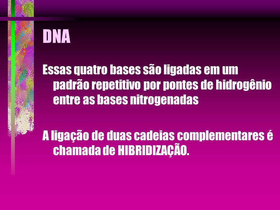 DNA Essas quatro bases são ligadas em um padrão repetitivo por pontes de hidrogênio entre as bases nitrogenadas A ligação de duas cadeias complementar