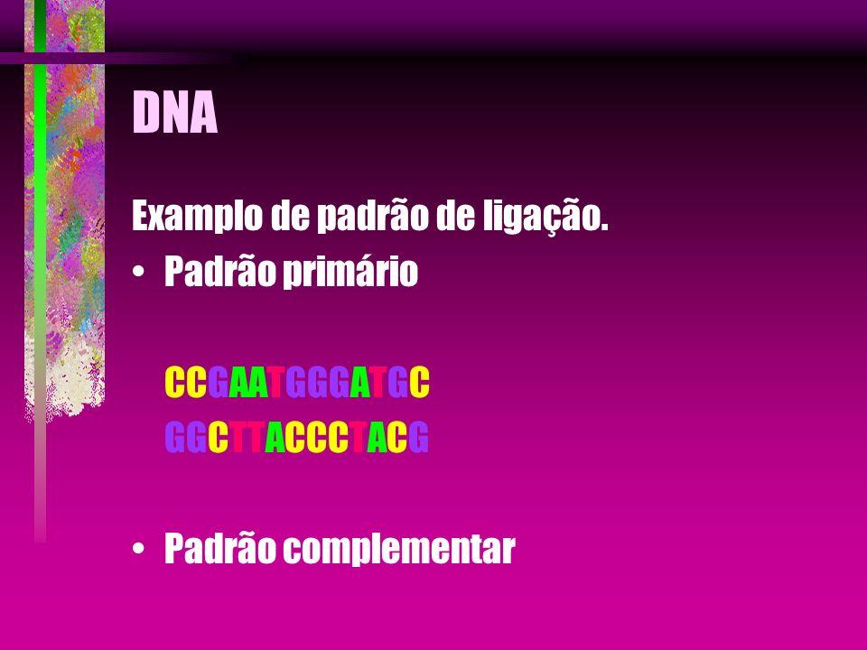 DNA Examplo de padrão de ligação. Padrão primário CCGAATGGGATGC GGCTTACCCTACG Padrão complementar