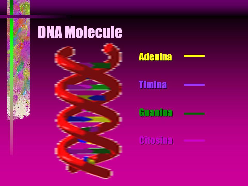 PCR Taq DNA Polimerase Essa bactéria produz uma enzima DNA polimerase, a qual amplifica o DNA a partir do anelamento com os primers, na presença de MG, a altas temperaturas.