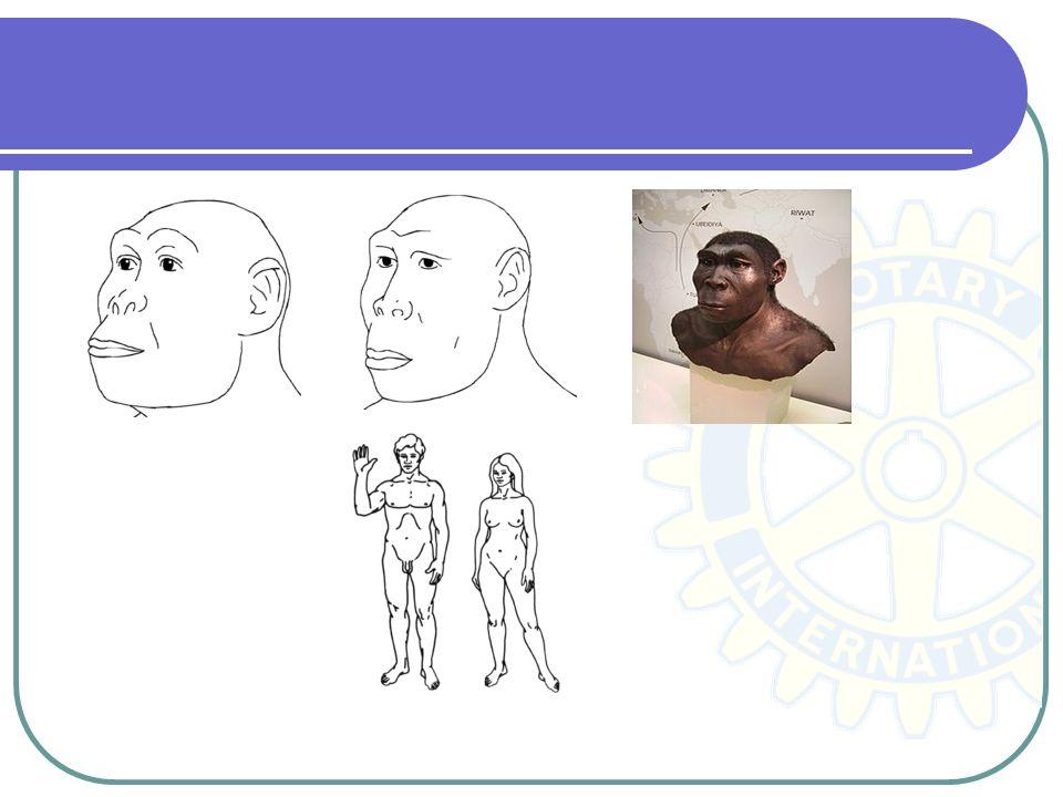 Os australopitecos (Australopithecus) (do Latim australis do sul, Grego pithekos macaco) ou macaco austral.