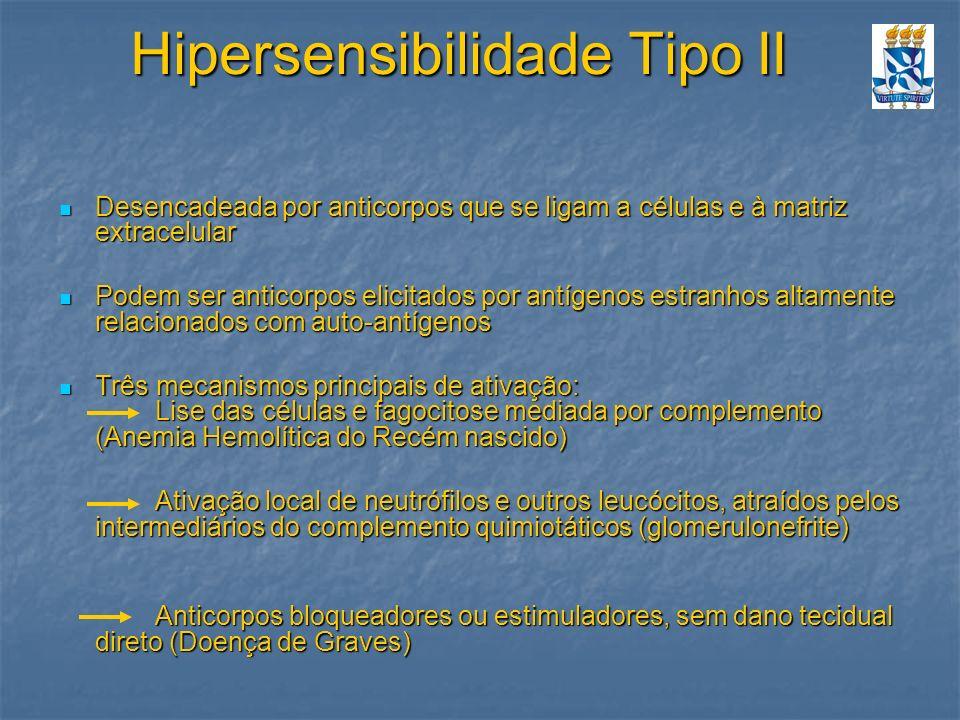 Hipersensibilidade Tipo II Desencadeada por anticorpos que se ligam a células e à matriz extracelular Desencadeada por anticorpos que se ligam a célul