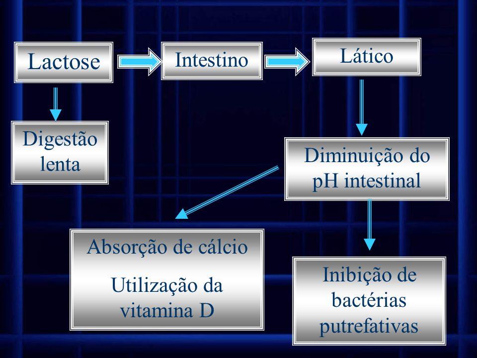 Intestino Lático Digestão lenta Diminuição do pH intestinal Inibição de bactérias putrefativas Absorção de cálcio Utilização da vitamina D Lactose
