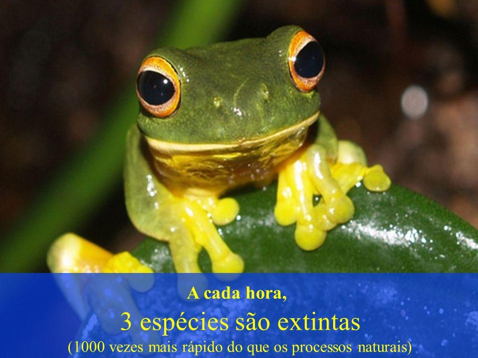A cada hora, 3 espécies são extintas (1000 vezes mais rápido do que os processos naturais)