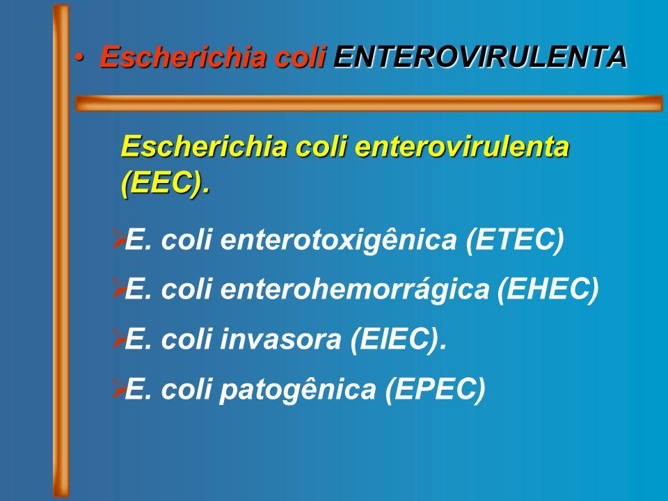 Escherichia coli ENTEROVIRULENTAEscherichia coli ENTEROVIRULENTA Escherichia coli enterovirulenta (EEC). E. coli enterotoxigênica (ETEC) E. coli enter