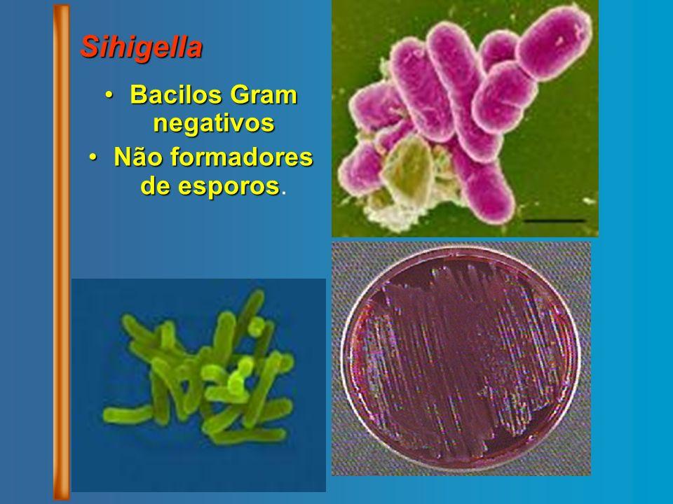 Bacilos Gram negativosBacilos Gram negativos Não formadores de esporosNão formadores de esporos. Sihigella