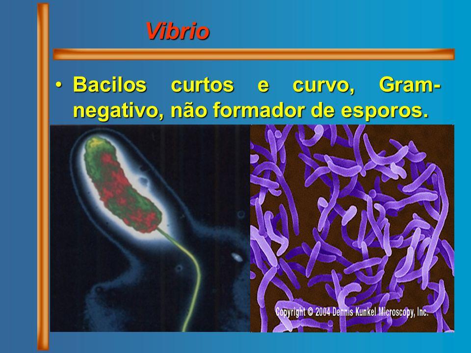 Bacilos curtos e curvo, Gram- negativo, não formador de esporos.Bacilos curtos e curvo, Gram- negativo, não formador de esporos. Vibrio