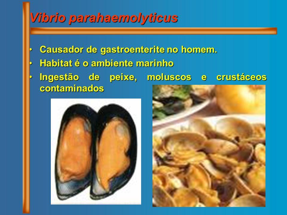 Vibrio parahaemolyticus Causador de gastroenterite no homem.Causador de gastroenterite no homem. Habitat é o ambiente marinhoHabitat é o ambiente mari