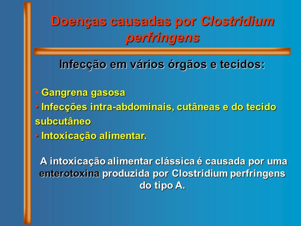 Doenças causadas por Clostridium perfringens Infecção em vários órgãos e tecidos: Gangrena gasosa Infecções intra-abdominais, cutâneas e do tecido sub