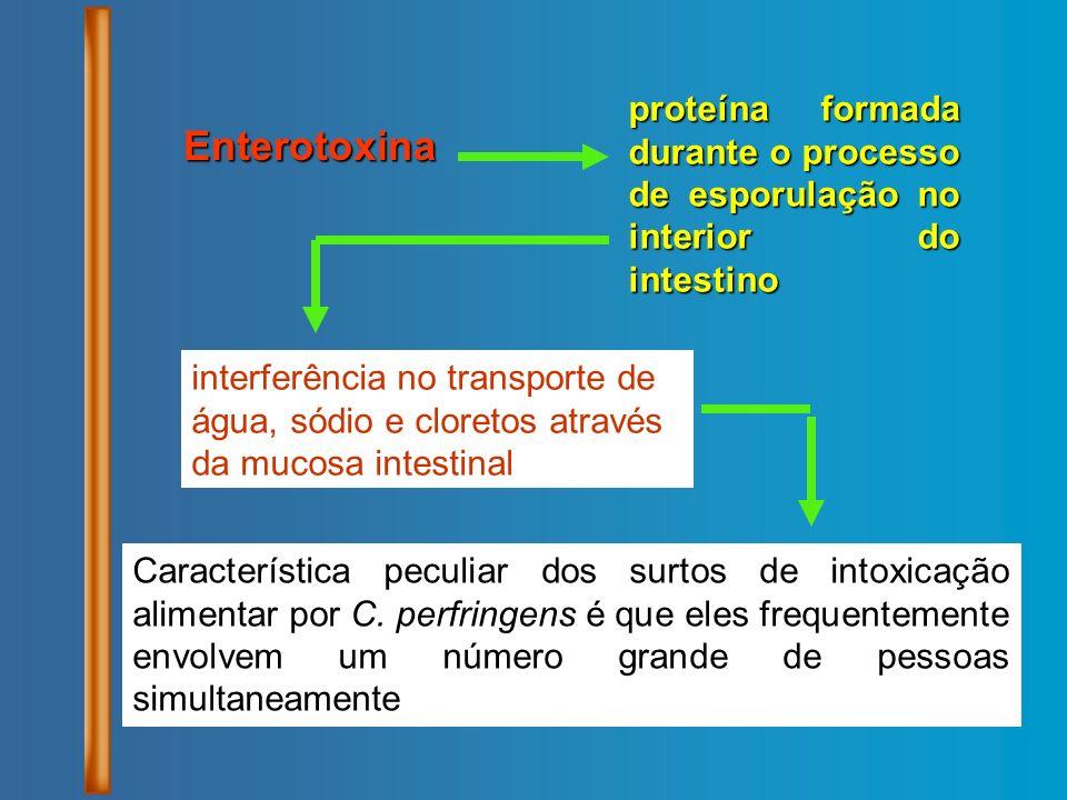Enterotoxina proteína formada durante o processo de esporulação no interior do intestino interferência no transporte de água, sódio e cloretos através