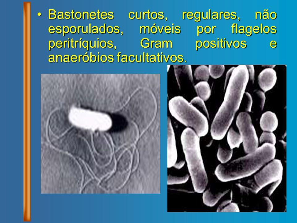 Bastonetes curtos, regulares, não esporulados, móveis por flagelos peritríquios, Gram positivos e anaeróbios facultativos.Bastonetes curtos, regulares