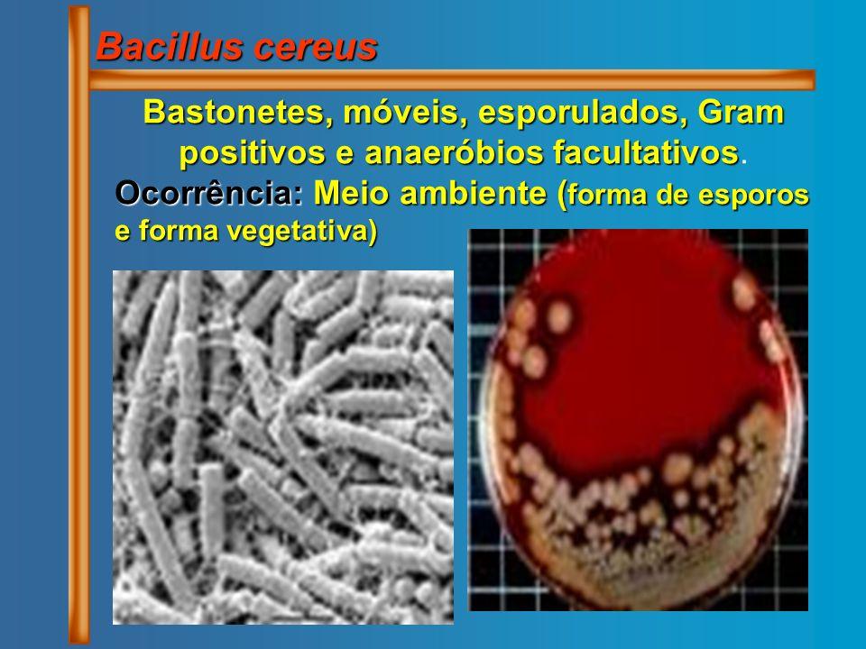Bacillus cereus Bastonetes, móveis, esporulados, Gram positivos e anaeróbios facultativos Bastonetes, móveis, esporulados, Gram positivos e anaeróbios