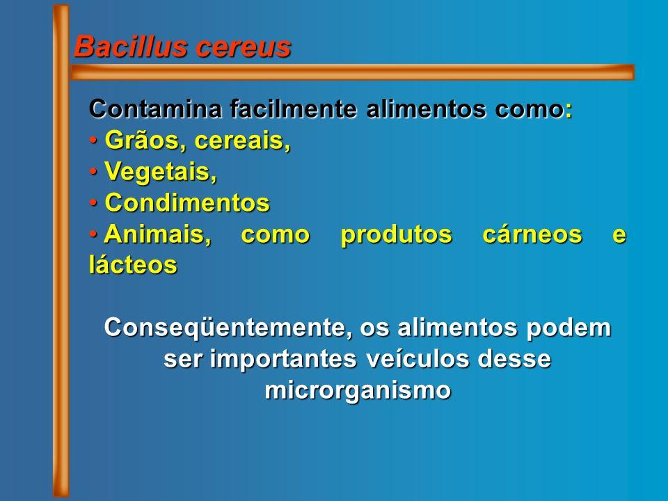 Bacillus cereus Contamina facilmente alimentos como: Grãos, cereais, Grãos, cereais, Vegetais, Vegetais, Condimentos Condimentos Animais, como produto