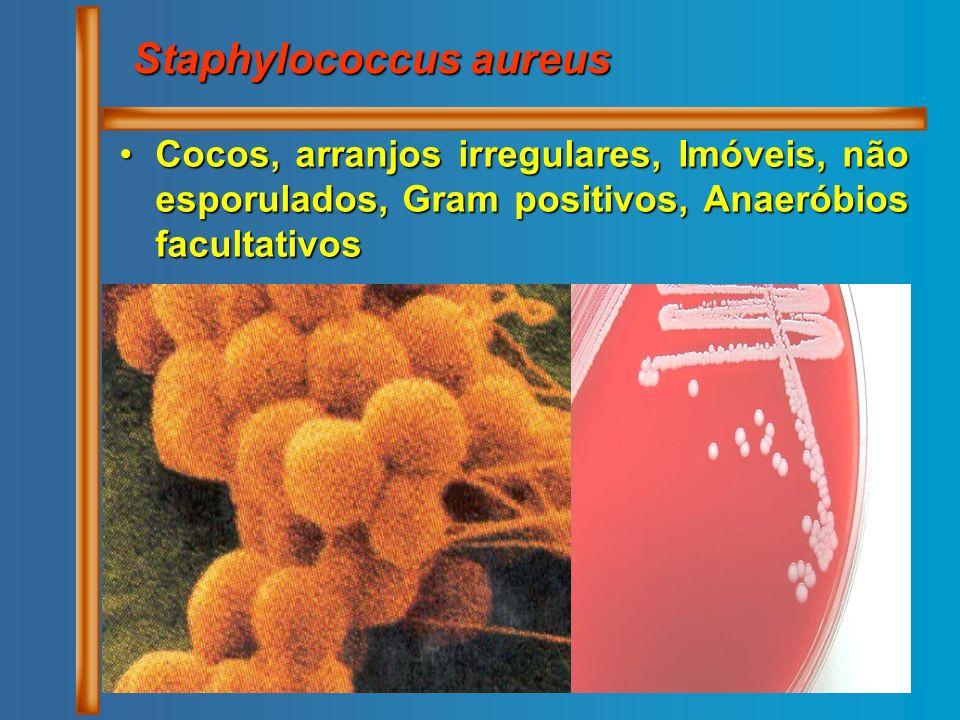 Cocos, arranjos irregulares, Imóveis, não esporulados, Gram positivos, Anaeróbios facultativosCocos, arranjos irregulares, Imóveis, não esporulados, G