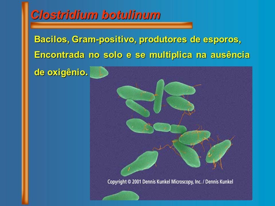 Clostridium botulinum Bacilos, Gram-positivo, produtores de esporos, Encontrada no solo e se multiplica na ausência de oxigênio.
