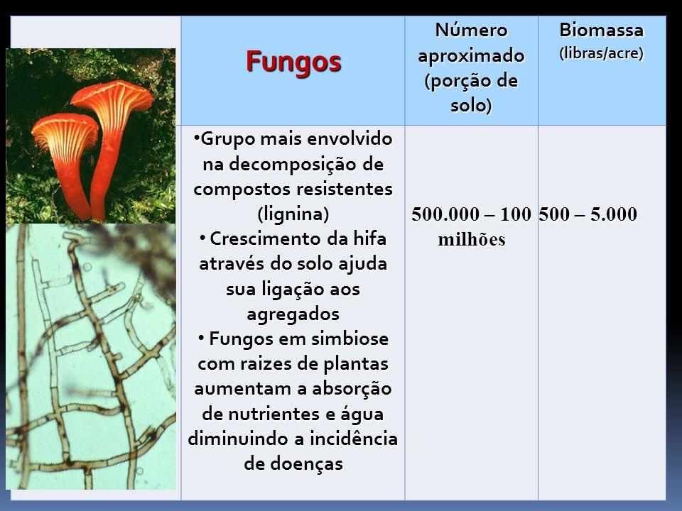 Fungos Número aproximado (porção de solo) Biomassa (libras/acre) Grupo mais envolvido na decomposição de compostos resistentes (lignina) Grupo mais en