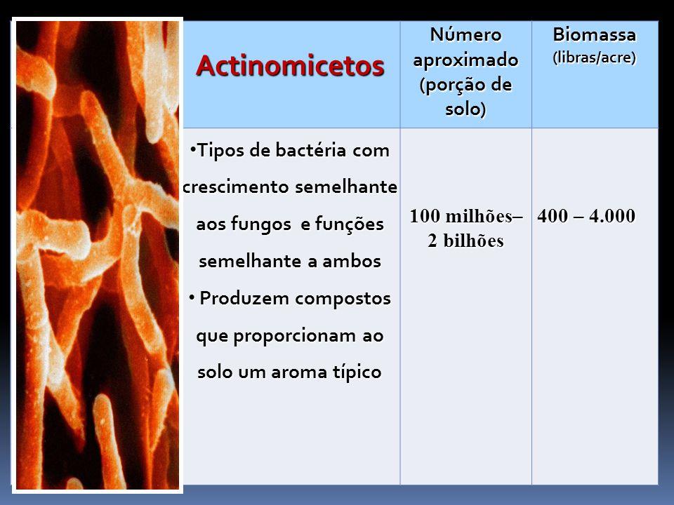 Actinomicetos Número aproximado (porção de solo) Biomassa (libras/acre) Tipos de bactéria com crescimento semelhante aos fungos e funções semelhante a