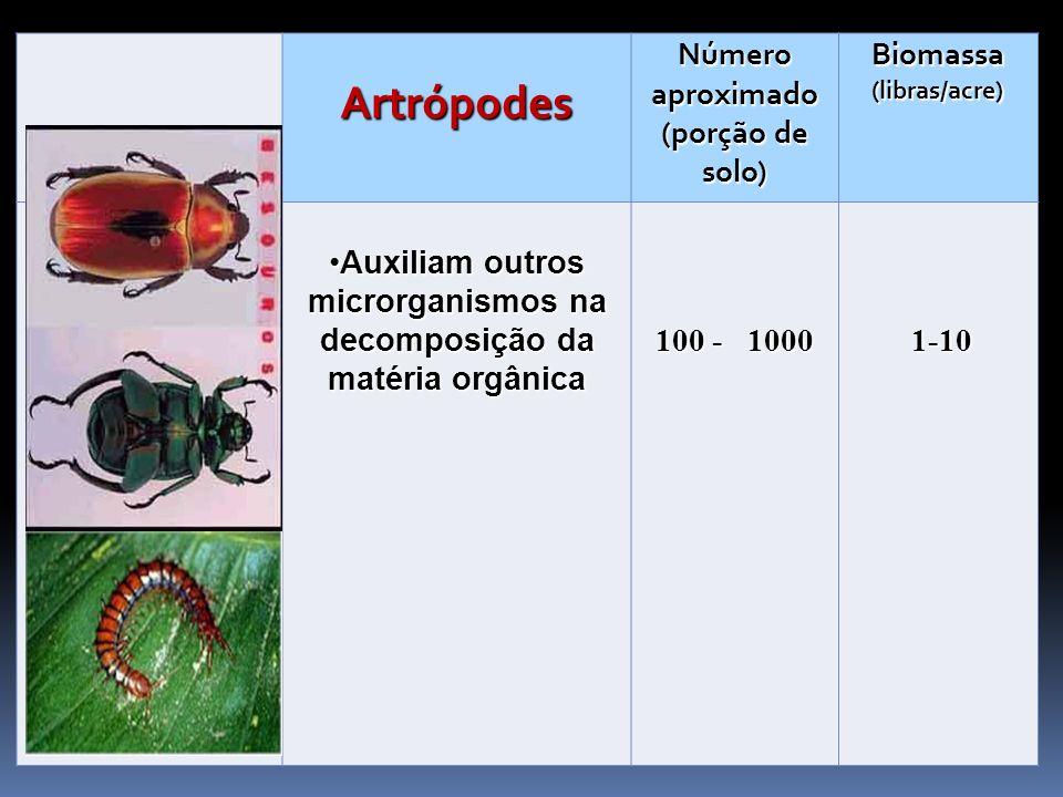 Artrópodes Número aproximado (porção de solo) Biomassa (libras/acre) Auxiliam outros microrganismos na decomposição da matéria orgânicaAuxiliam outros
