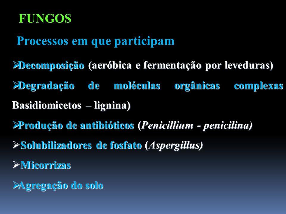 Decomposição (aeróbica e fermentação por leveduras) Decomposição (aeróbica e fermentação por leveduras) Degradação de moléculas orgânicas complexas Ba