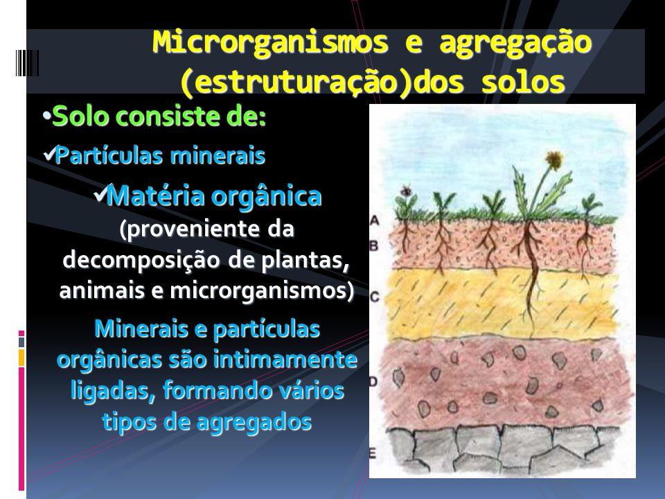 Solo consiste de: Solo consiste de: Partículas minerais Partículas minerais Matéria orgânica (proveniente da decomposição de plantas, animais e micror