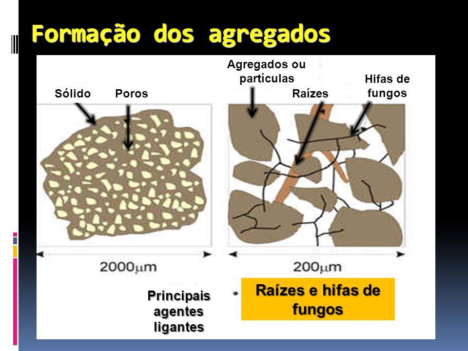 Formação dos agregados Agregados ou partículas Raízes Hifas de fungos PorosSólido Principais agentes ligantes Raízes e hifas de fungos