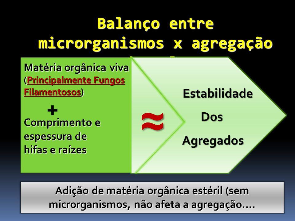 Balanço entre microrganismos x agregação do solo Matéria Matéria orgânica viva (Principalmente Fungos Filamentosos) Comprimento e espessura de hifas e