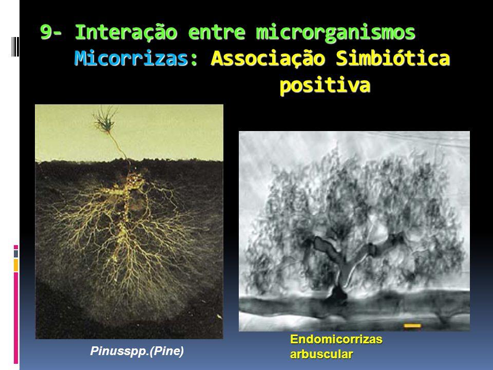 9- Interação entre microrganismos Micorrizas: Associação Simbiótica positiva 9- Interação entre microrganismos Micorrizas: Associação Simbiótica posit