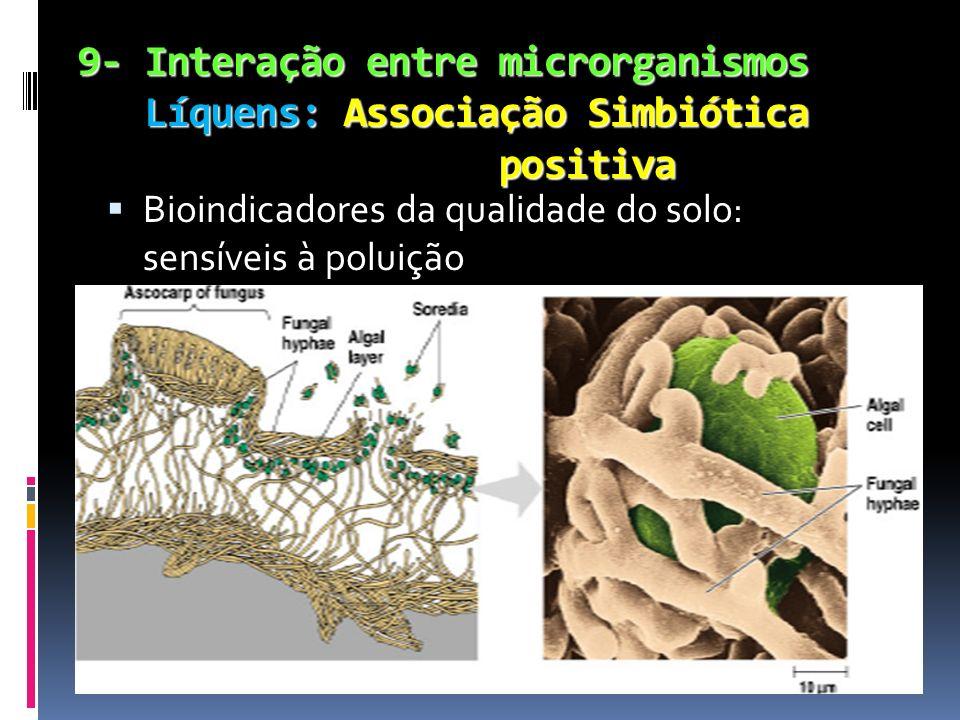 9- Interação entre microrganismos Líquens: Associação Simbiótica positiva 9- Interação entre microrganismos Líquens: Associação Simbiótica positiva Bi