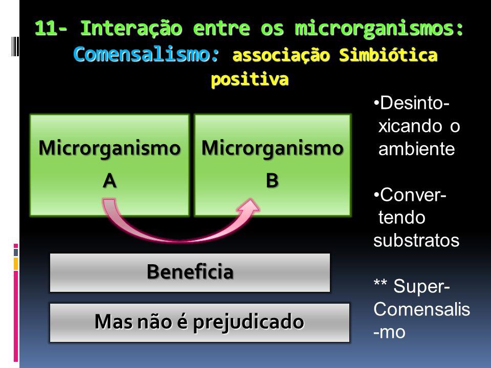 11- Interação entre os microrganismos: Comensalismo: associação Simbiótica positiva MicrorganismoAMicrorganismoB Beneficia Desinto- xicando o ambiente
