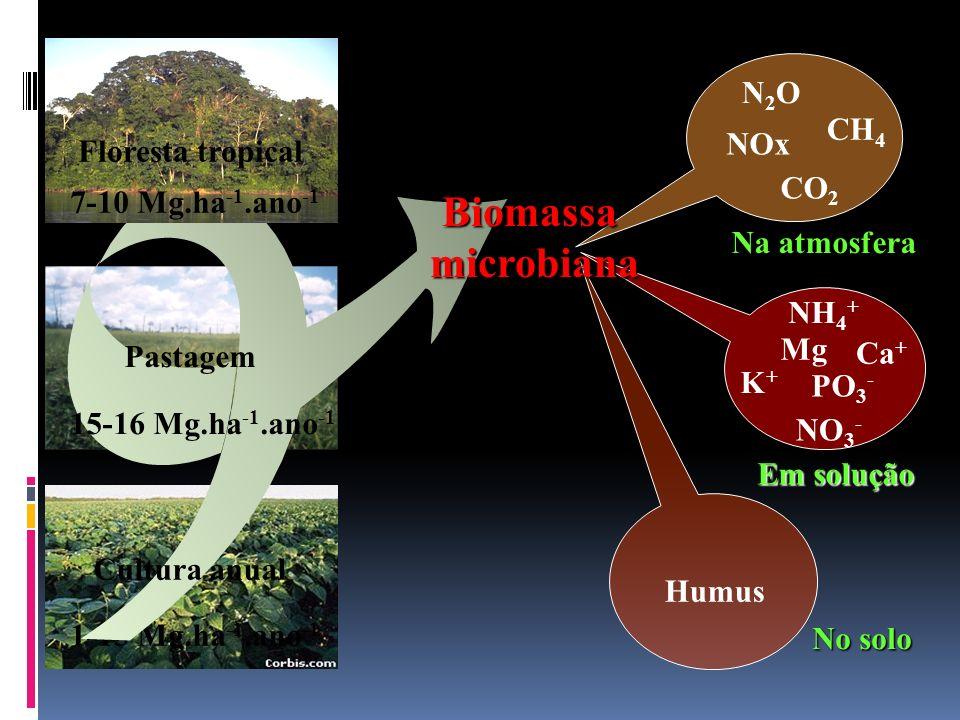 1-15 Mg.ha -1.ano -1 Biomassamicrobiana 7-10 Mg.ha -1.ano -1 15-16 Mg.ha -1.ano -1 Floresta tropical Pastagem Cultura anual NH 4 + NO 3 - Humus CO 2 N