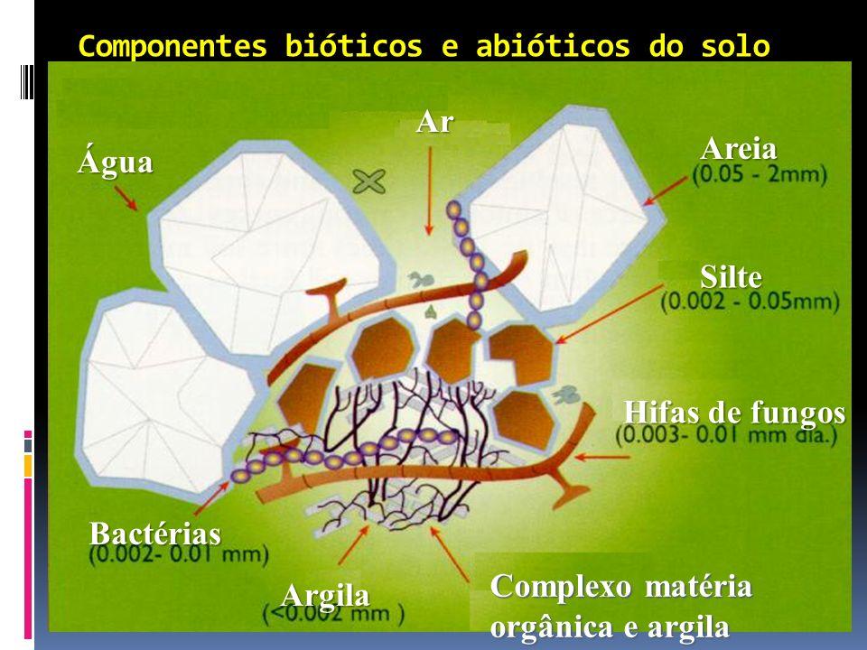 Componentes bióticos e abióticos do solo Água Ar Areia Silte Hifas de fungos Complexo matéria orgânica e argila Argila Bactérias