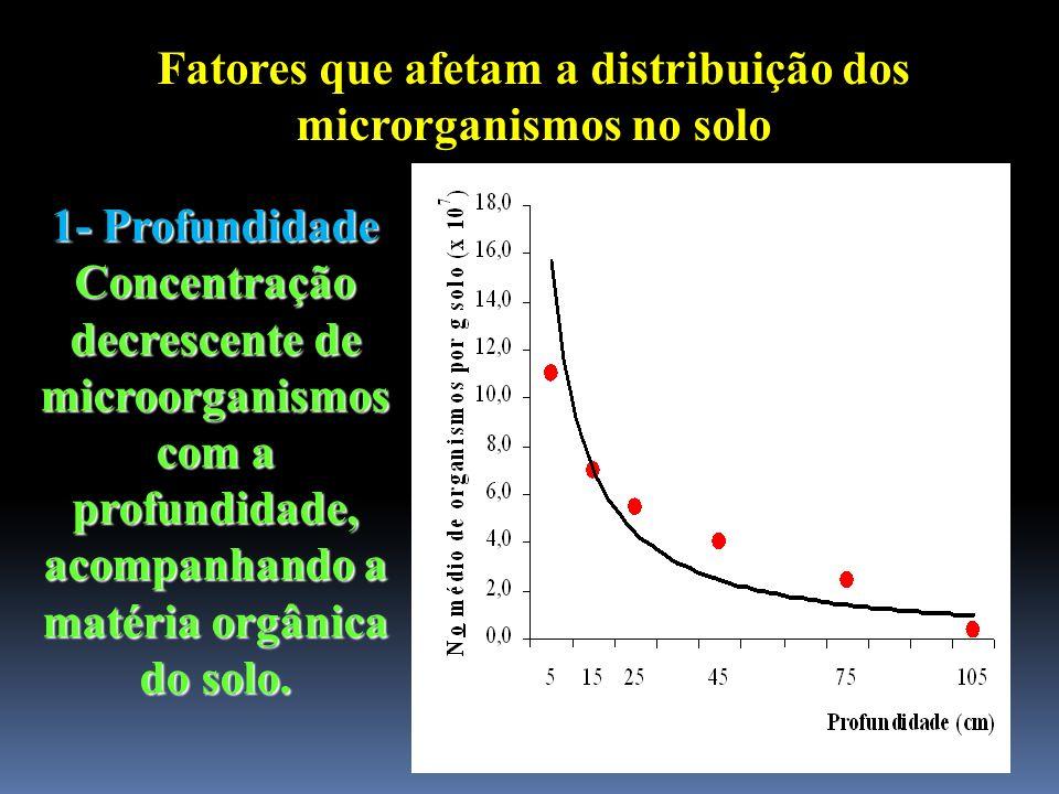 Fatores que afetam a distribuição dos microrganismos no solo 1- Profundidade Concentração decrescente de microorganismos com a profundidade, acompanha