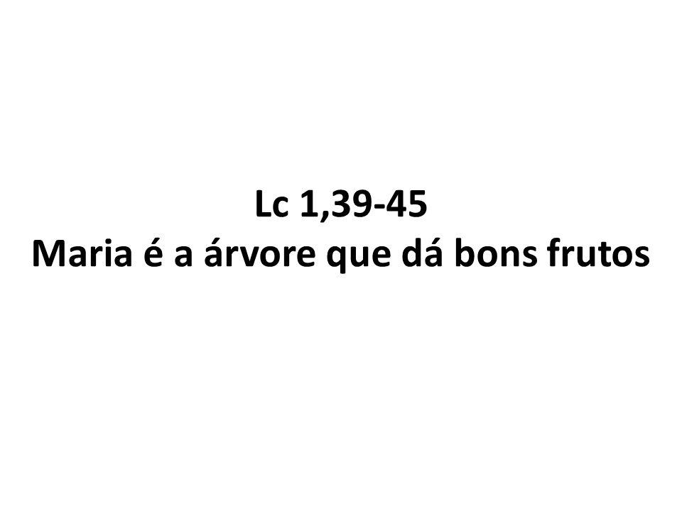 Lc 1,39-45 Maria é a árvore que dá bons frutos