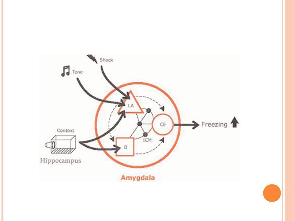S TRESS Eixo hipotalamo-hipofose-adrenal