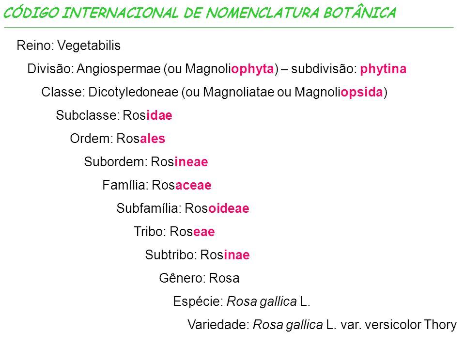 Reino: Vegetabilis Divisão: Angiospermae (ou Magnoliophyta) – subdivisão: phytina Classe: Dicotyledoneae (ou Magnoliatae ou Magnoliopsida) Subclasse: Rosidae Ordem: Rosales Subordem: Rosineae Família: Rosaceae Subfamília: Rosoideae Tribo: Roseae Subtribo: Rosinae Gênero: Rosa Espécie: Rosa gallica L.