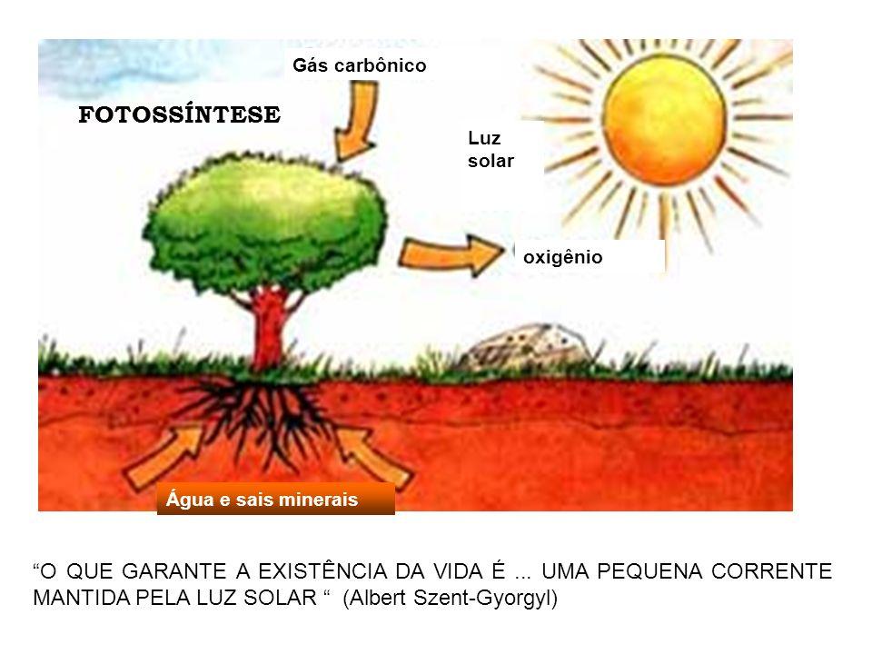 FOTOSSÍNTESE Água e sais minerais oxigênio Gás carbônico Luz solar O QUE GARANTE A EXISTÊNCIA DA VIDA É...